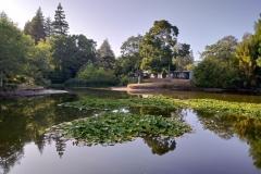 Chapel Lake, University of Waikato.
